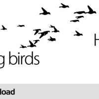FLYING BIRDS – MOTION GRAPHICS (VIDEOHIVE)