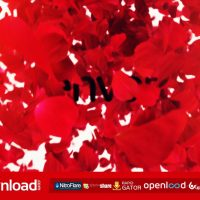 PETALS LOGO REVEAL II FREE DOWNLOAD VIDEOHIVE TEMPLATE