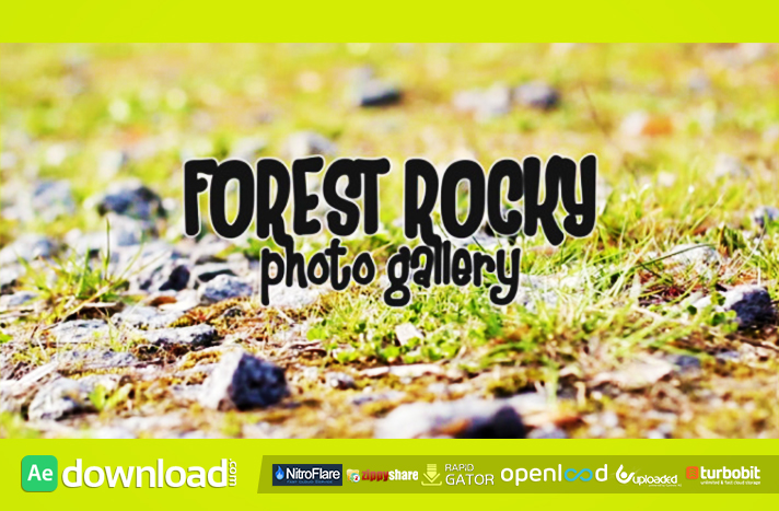 Forest Rocky Photo Gallery
