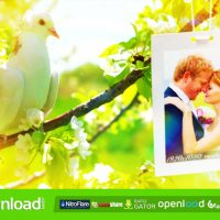 WEDDING FREE DOWNLOAD VIDEOHIVE TEMPLATE AFTER EFFECTS PROJECT