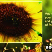 BUTTERFLY FOREST – AFTER EFFECT PROJECT (VIDEOHIVE)