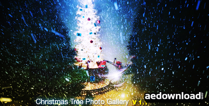 Christmas Tree Photo Gallery