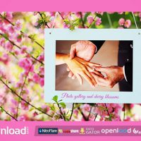 PHOTO GALLERY AND CHERRY BLOSSOMS – AFTER EFFECTS PROJECT (VIDEOHIVE)