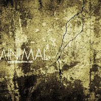 MINIMAL 3121303 – AFTER EFFECTS PROJECT (VIDEOHIVE)