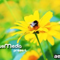 PHOTO GALLERY ON A FLOWER HOLIDAY (VIDEOHIVE)
