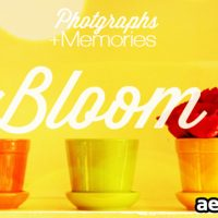 PHOTOGRAPHS AND MEMORIES BLOOM (VIDEOHIVE)