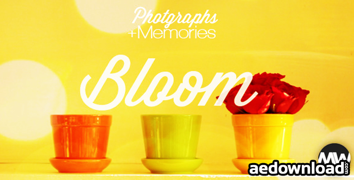 Photographs and Memories BloomPhotographs and Memories Bloom