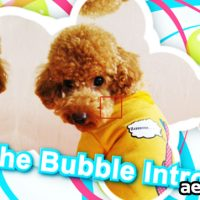 THE BUBBLE INTRO – AFTER EFFECTS PROJECT (VIDEOHIVE)