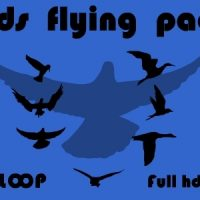 BIRDS FLYING PACK – MOTION GRAPHIC (VIDEOHIVE)