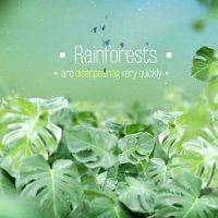 VIDEOHIVE THE RAINFORESTS TITLES FREE DOWNLOAD