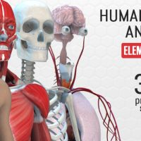 VIDEOHIVE HUMAN BODY ANATOMY FREE DOWNLOAD