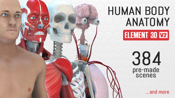Videohive Human Body Anatomy Free Download Free After Effects
