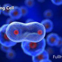 DIVIDING CELL – MOTION GRAPHIC (VIDEOHIVE) FREE DOWNLOAD