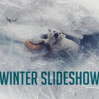 VIDEOHIVE WINTER PROJECT SLIDESHOW FREE DOWNLOAD