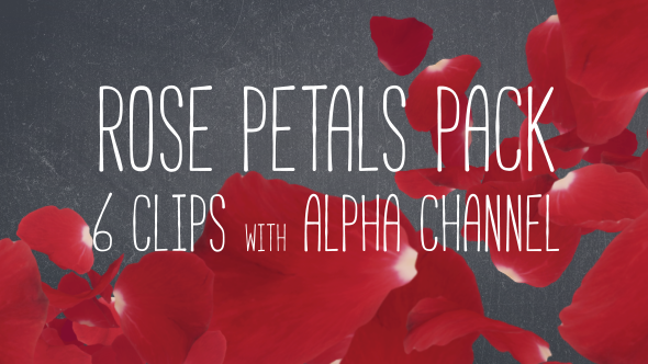 Videohive - Rose Petals Pack 19386698 - Free Download - Free After