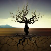 VIDEOHIVE TREE OF LIFE FREE DOWNLOAD