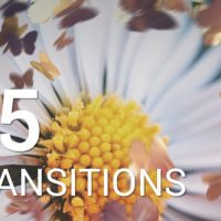 Butterflies Transitions – Free After Effects Template