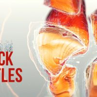 VIDEOHIVE ROCK TITLES FREE AFTER EFFECTS TEMPLATE