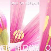 VIDEOHIVE FLOWER BLOOM LOGO